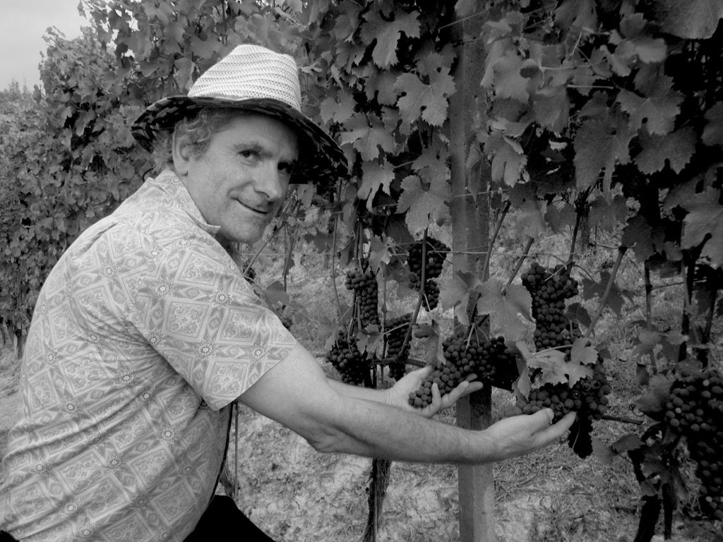 achille viglione vendemmia grappoli di uva nel vigneto